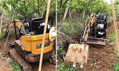 果园施工,三一微挖挑战极限狭窄工况!施工项目