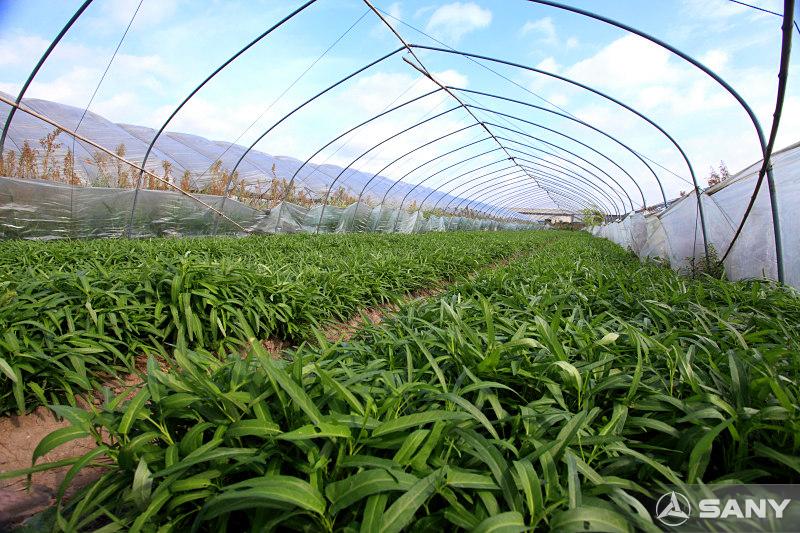 三一昆山产业园农业基地之大棚作物